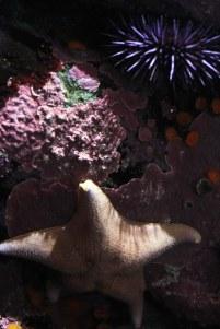 Starfish & Sea Urchin. Photo: C. Greenwood.